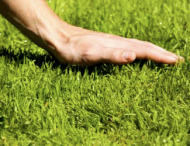 3 steps to a great Spring Lawn