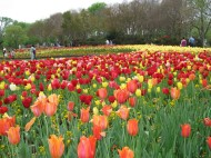 Spring Happenings in the DFW #DALLAS#REALESTATE